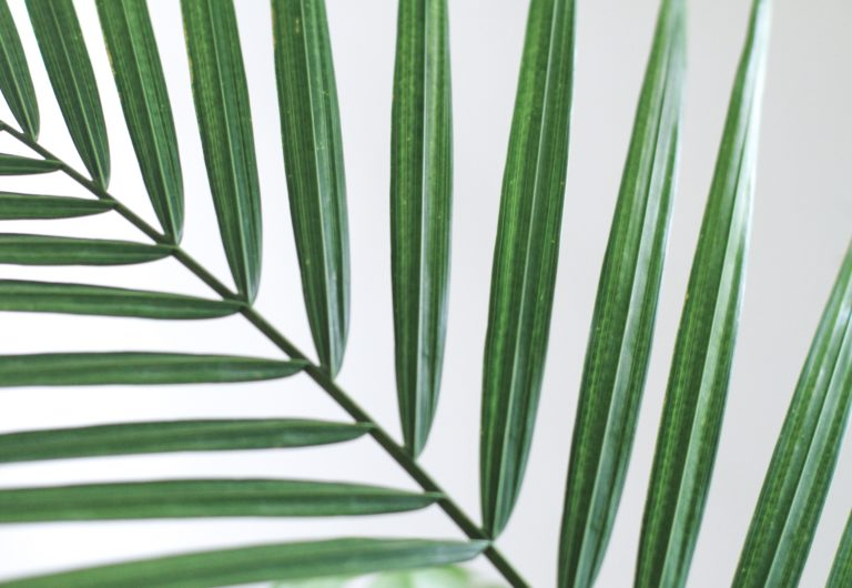 Für den König – Gedanken zu Palmsonntag